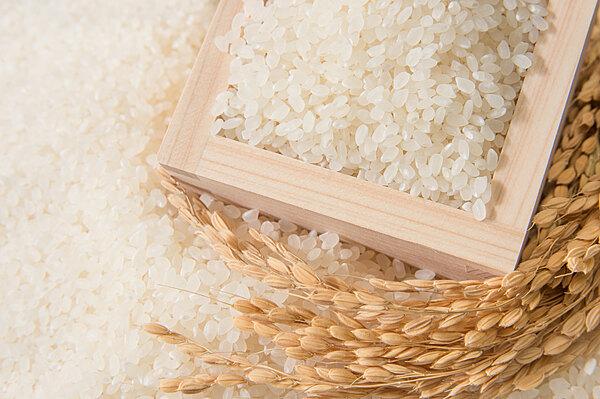 台南稻米-台南11號