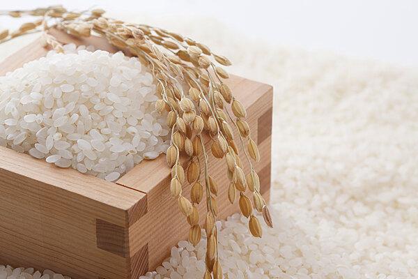 台南稻米-台梗9號